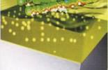 bakterie3.jpg